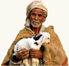 bedouin_lamb_gift
