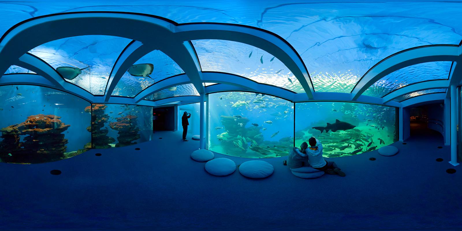 Aquarium palma de mallorca spain 360 vr panorama for Site aquarium