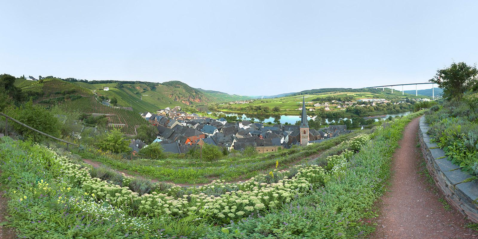 View over Moselle - Uerzig