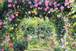 rosegardenAC