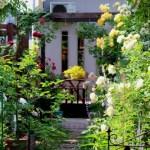 六本木のど真ん中に満開のバラ園が登場!「バラ大国日本 輝くバラたちの庭」写真展が開催中!