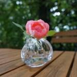 「バラを育ててみたい!」と思ったら、まず考える基本的な5つの疑問に答えるQ&A