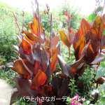カンナは葉が美しいガーデンの主役級植物! カンナの花の品種とガーデンでの使い方実例