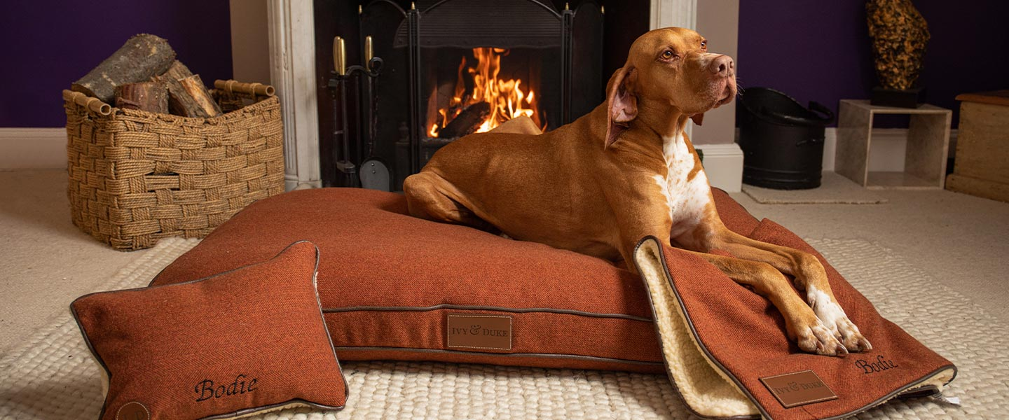 An English Pointer lying on an Ivy and Duke Pedigree dog bed and matching dog blanket in front of an open fire, with a matching personalised dog pillow by its side.