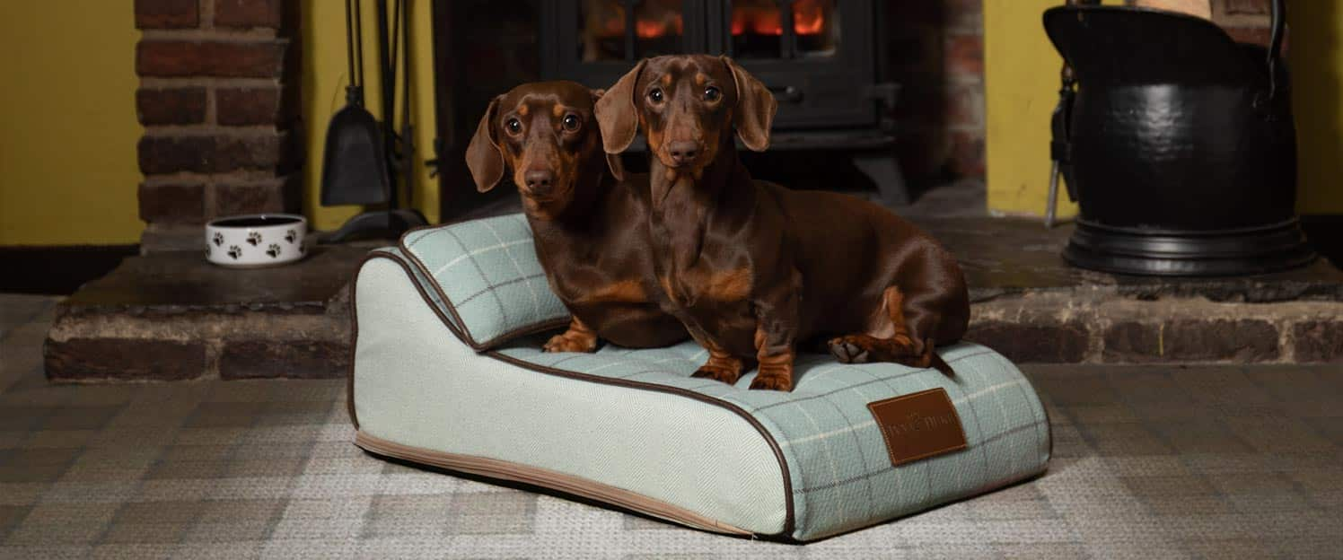 The Chaise Chien in Duck Egg