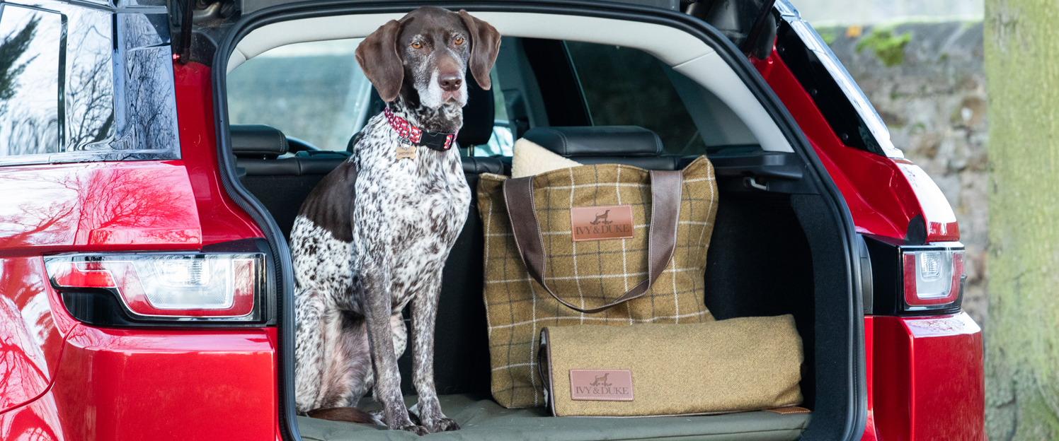 An English Pointer sitting in the boot of a car on an Ivy and Duke waterproof dog travel mat with traditional large fabric tote bag and dog blanket to the side.