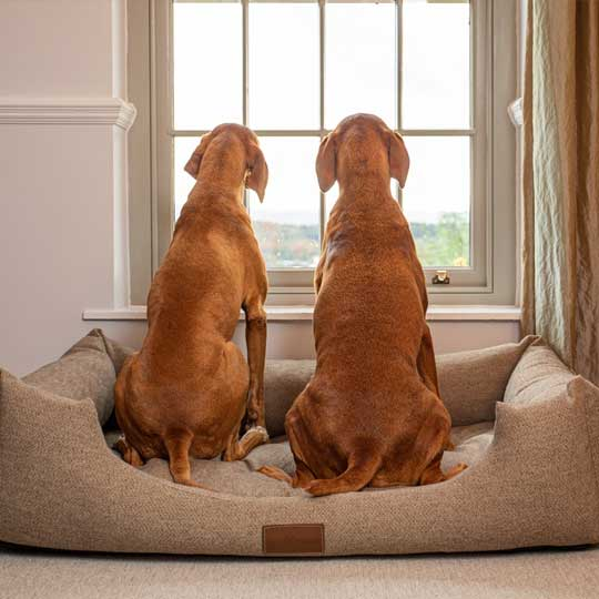 ivy-and-duke-dog-beds-easy-to-clean-1