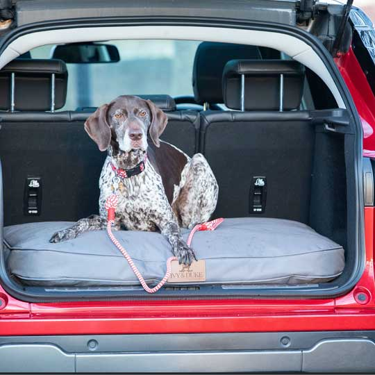 ivy-and-duke-dog-beds-easy-to-clean-2