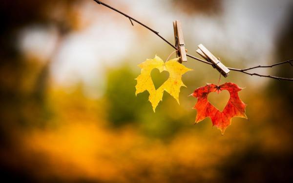 讓我們的愛情停在秋天之時 Lyrics by 艾菲 (OT: 我們的基因)