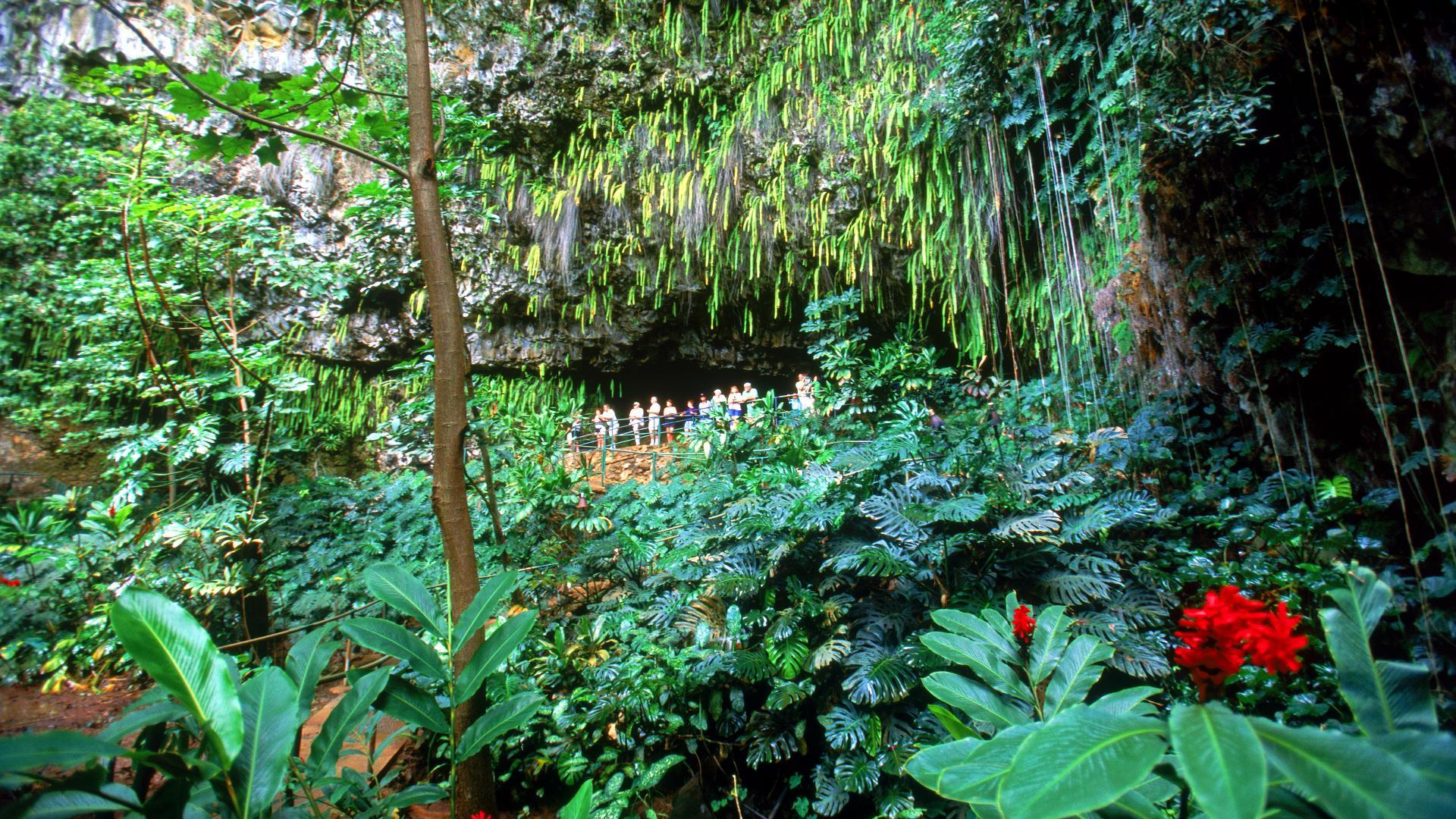 fern grotto kauai hawaii