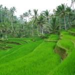 Becoming Bali