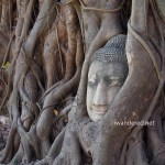 Ayutthaya Vs. Sukhothai – A Comparison of Two Ancient Ruins in Thailand