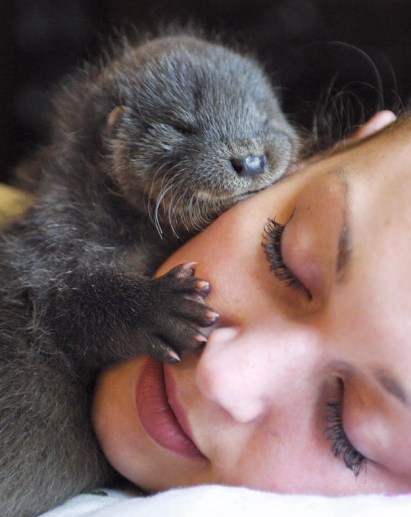 Otter Pup Cuddles Up to Human