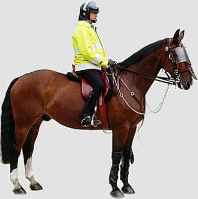 Cop on Horse