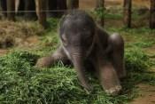 Baby Elephants 05