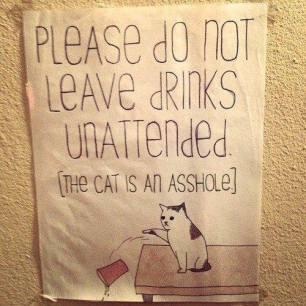 Random Cat Craziness 09