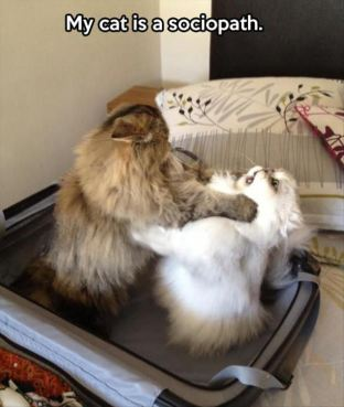 funny-my-cat-is-a-sociopath-01