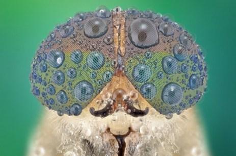 Close-Up Bug Eyes 01