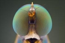 Close-Up Bug Eyes 03