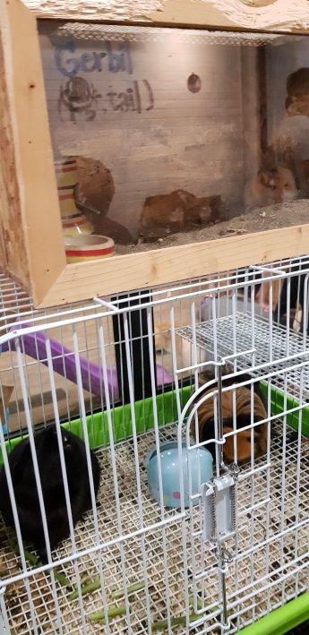 Little furry animals