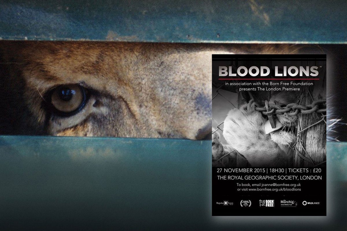 blood-lions-london