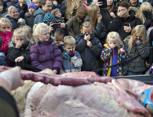 Odense Zoo Dissection