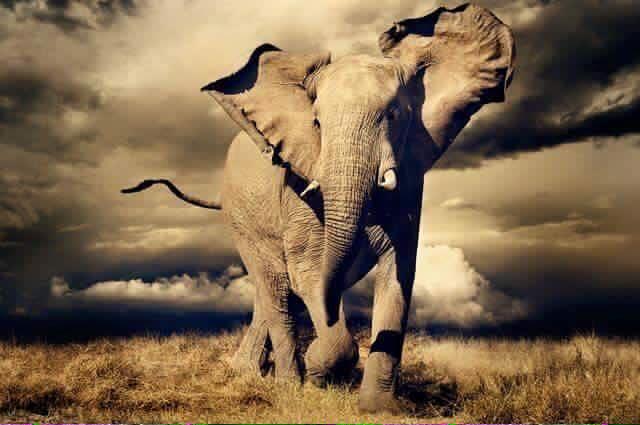 8825b4ff4 The  Theatre  of Wildlife Decimation