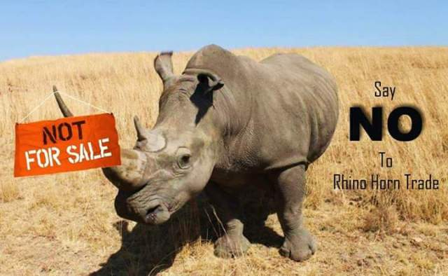 Say No to Rhino Horn Trade