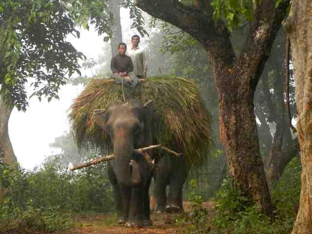 Elephant_working