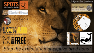 Captive Lion Petition