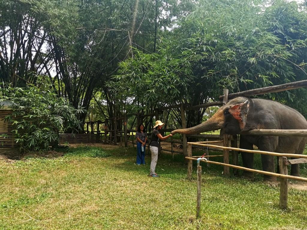 Me feeding an elephant