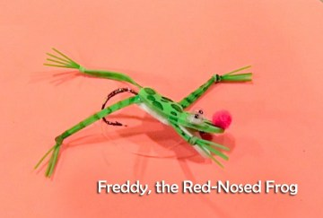 aFreddy Red Nosed frog