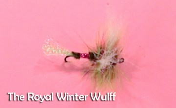 aRoyal Winter Wulff