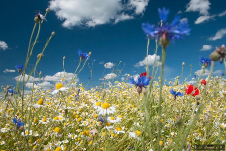 DSC_8819_kwiaty