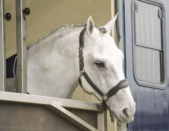 Horse trailer safety guide