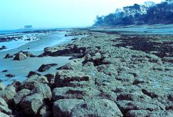 Bembridge shore © MC