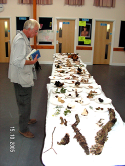 Dr David Biggs inspects the Fungus found on the foray © GT