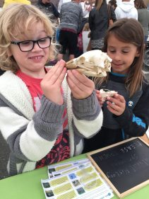 Exploring IW Natural History Specimens