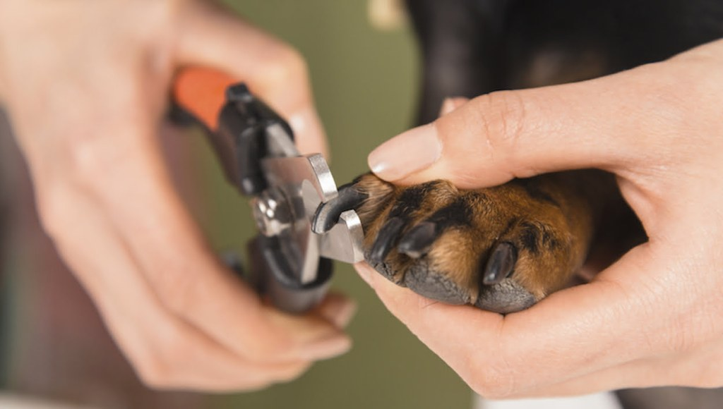 training your dog to tolerate nail trimming Los Angeles dog trainer