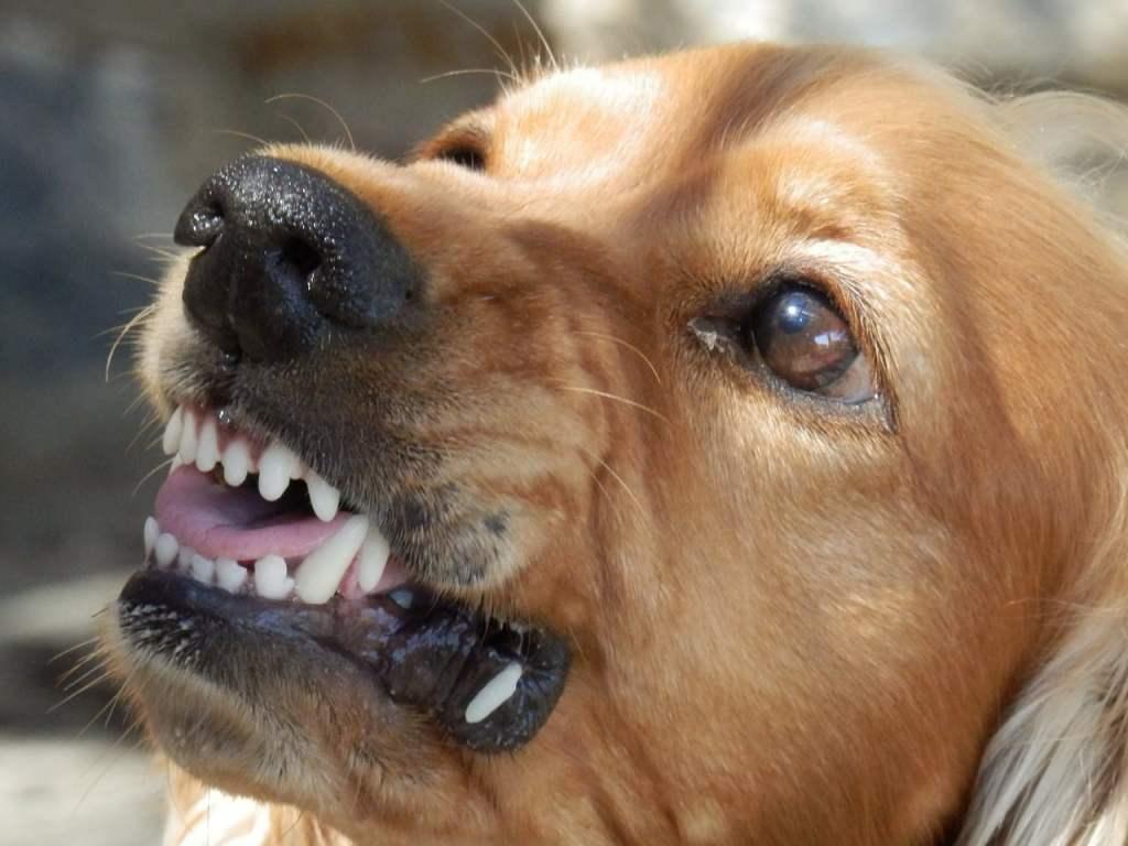 aggressive dog la