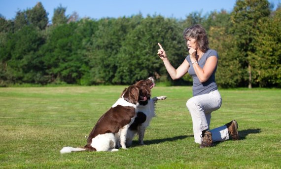 Can an older pet benefit from working with a dog trainer?