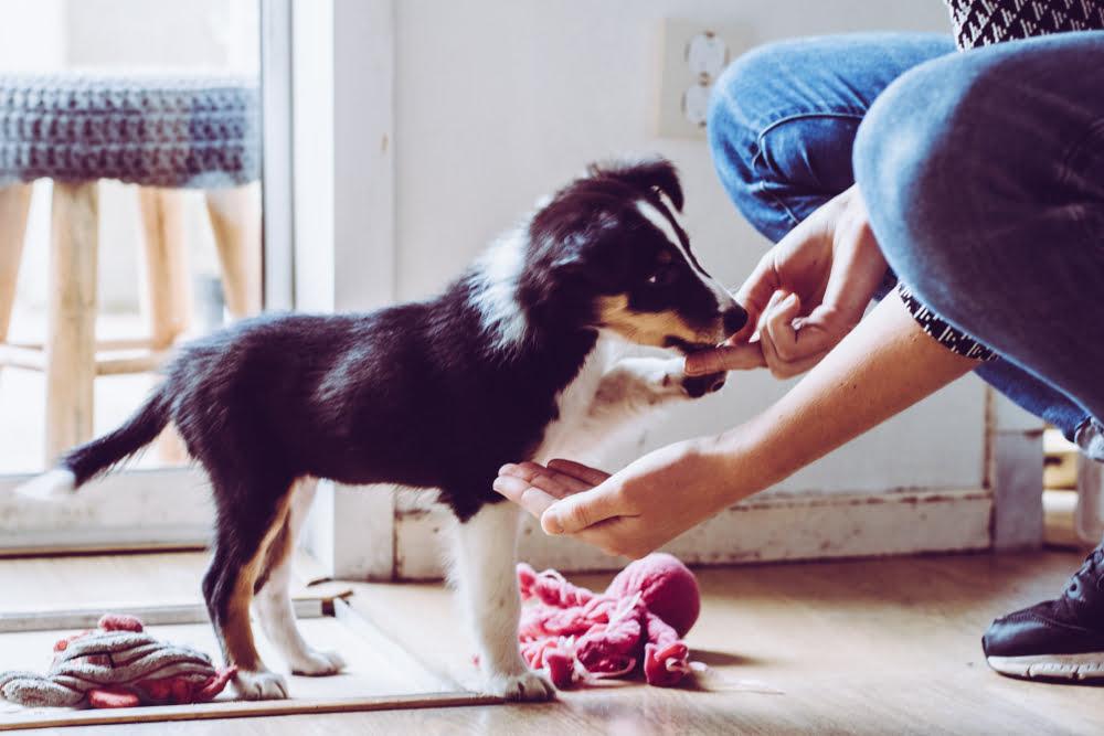 Dog trainer Los Angeles