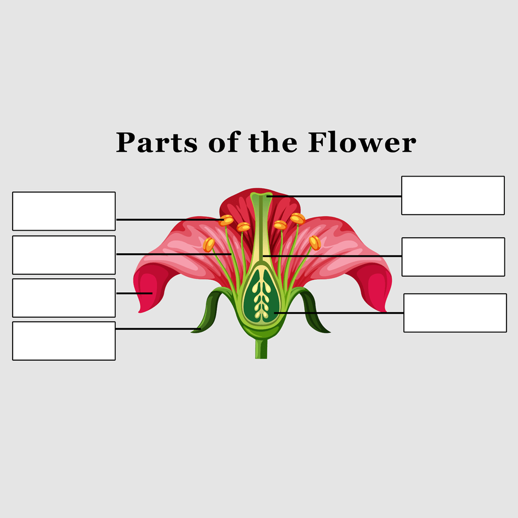 Parts Of The Flower