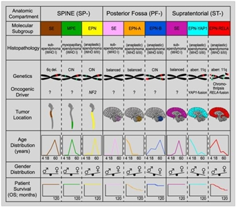 Graph showing key molecular and clinical characteristics of ependymal tumor subgroups.