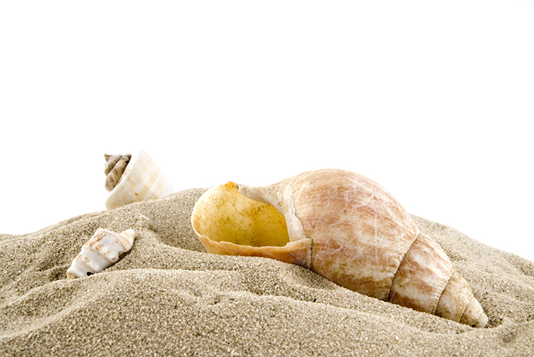 sea-shells in the sand on the beach