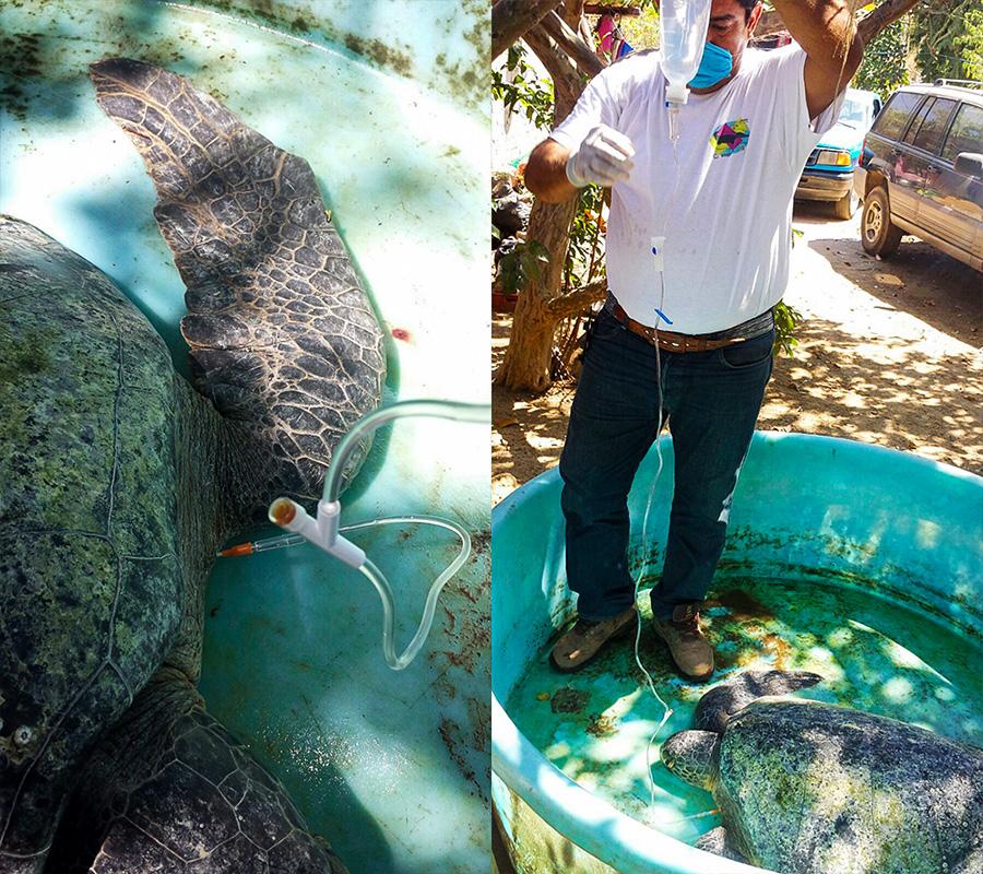 tortugas-muertas-zihuatanejo
