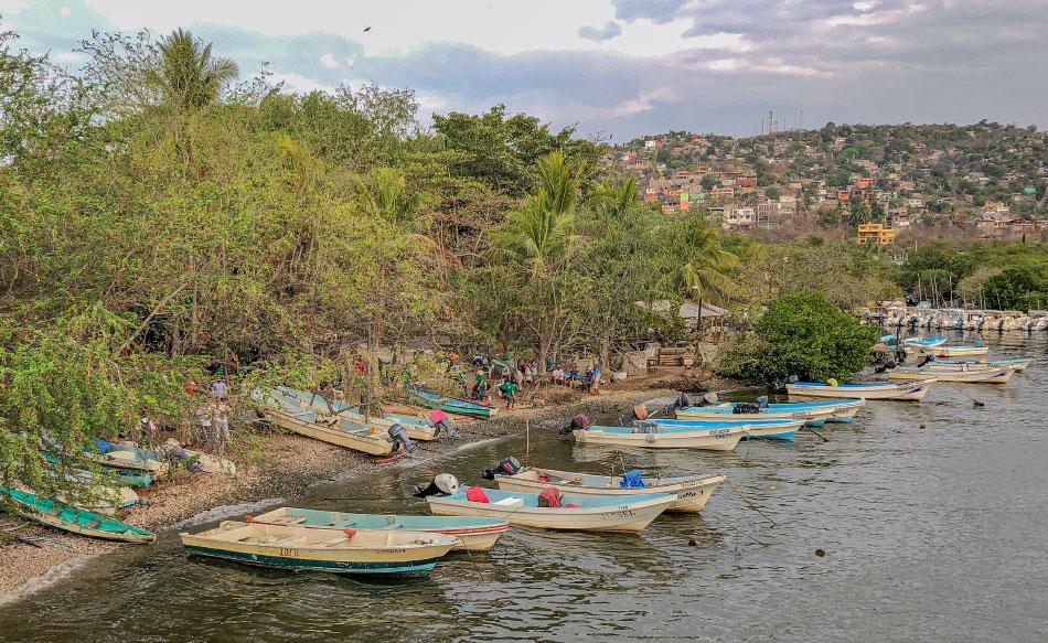 campania-reforestacion-zihuatanejo-las-salinas-2019--____.jpg