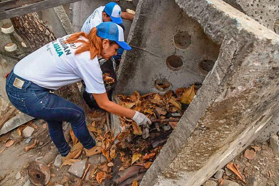 campania-reforestacion-zihuatanejo-las-salinas-2019___.jpg