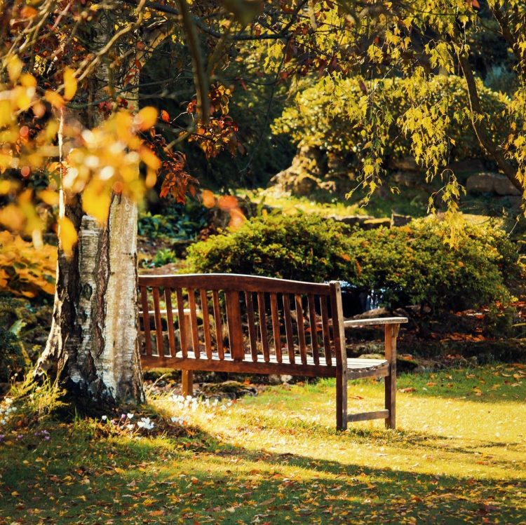 brown wooden bench near green leaf tree