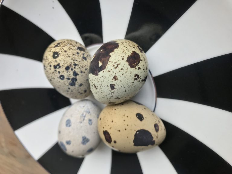 Bıldırcın Yumurtası Harikaları